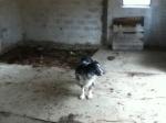 barn floor with Mucka