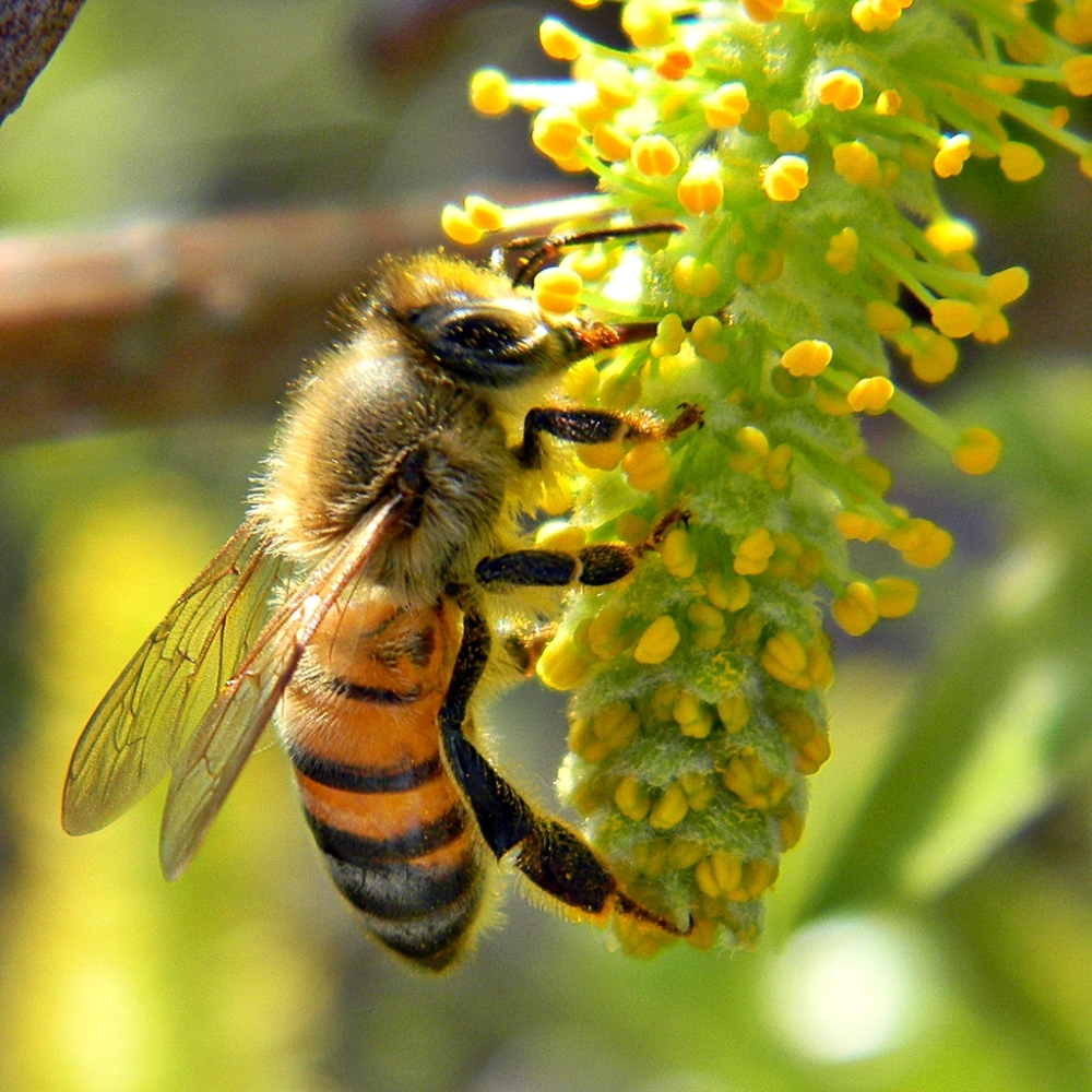 Intro to Beekeeping at the Trillium Center - April 29