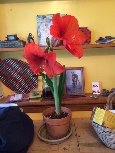 giant flower