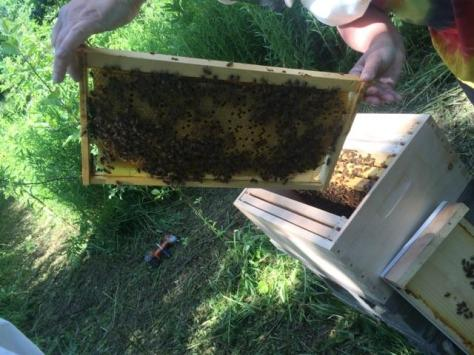 bee day 2