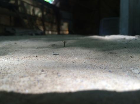 coop unflat floor