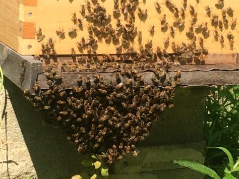 hive hot hot