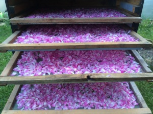 drying petals copy